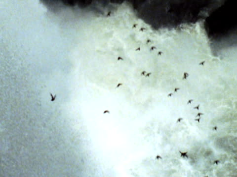 birds flying by Iguacu Waterfall NTSC
