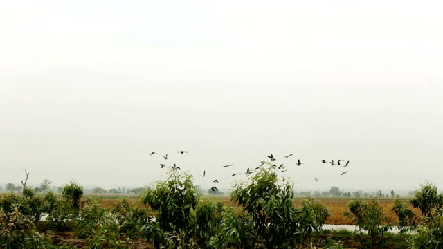 Birds Flying in der Natur