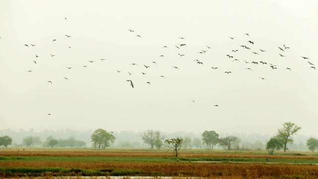 Birds Flying in the Nature