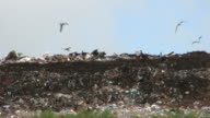 Birds in a Landfill, High Definition