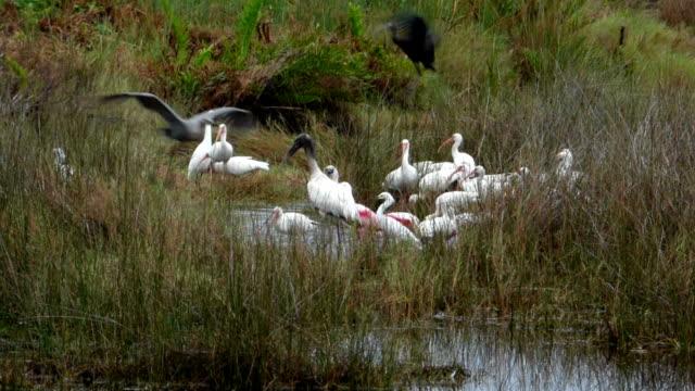 Birds in a Wetlands in Florida