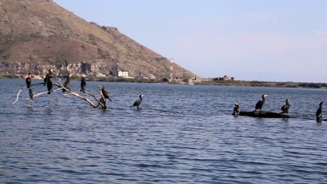 Vogels in Nationaal Park waterlink Lake, Albanië