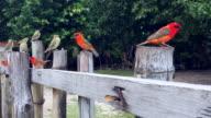 Birds of Curieuse Island, Seychelles