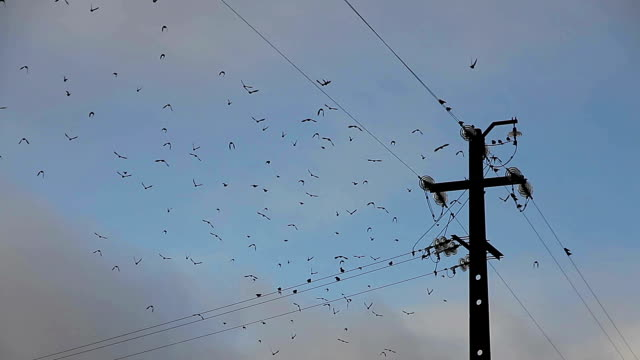 birds on electric wire