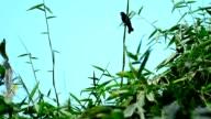 Vögel am Baum
