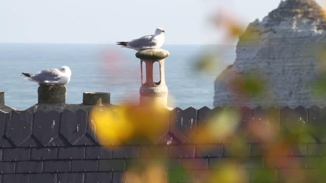 Vogels op de top van gebouw
