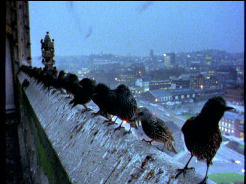 Birds perched on rooftop overlook city centre buildings and traffic