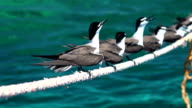Birds take relax on the rope of a boat ancor in Seyal island