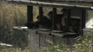 Birdwatchers peer through binoculars in hide, Norfolk, UK