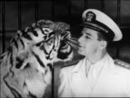 Black and white 1940 close up trainer and tiger with faces close together / tiger snarls / Coney Island, NY / industrial /