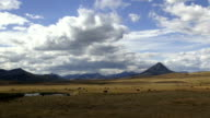 Black angus cows in large golden prairie grass field with rocky mountains in background and puffy clouds and blue sky.