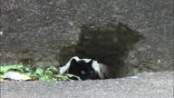 A black cat sitting inside a hole in a concrete wall, Ainoshima, Fukuoka, Japan