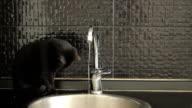 Schwarze cat