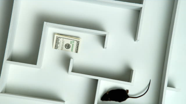 HA, MS, Black mouse and money in maze