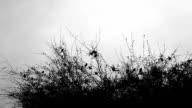 Black sparrow on a tree