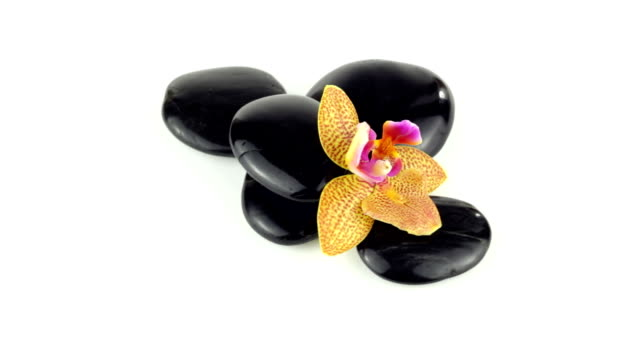 Black stones with orchid