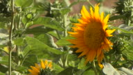 Block Shot Flowers Mool Sagar Garden Jodhpur