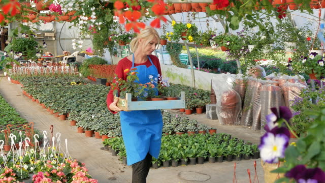 Blonde mature woman working with flowers in plant nursery