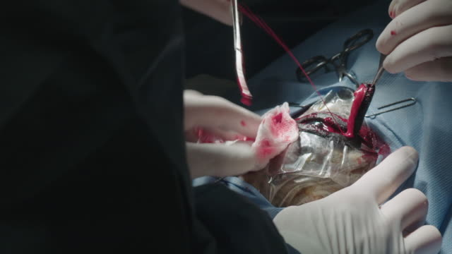 Blood squirts out of horse's eyesocket during surgery