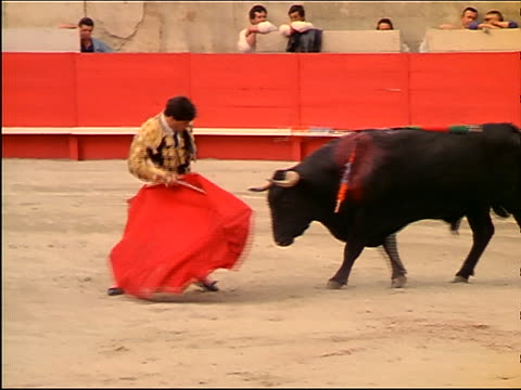 Bloody bull with banderillas in neck charging matador with red cape