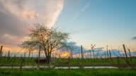 8 K T/L blühende Kirsche Baum im Feld
