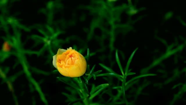 Blühenden Blumen.