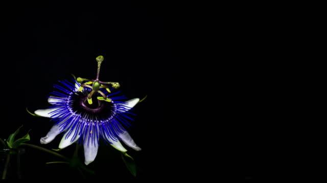 Blumen-Amazong Sequence Vol1