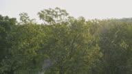 Luftaufnahme der blühenden Bäumen am Morgen