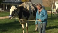'Blossom' the Guinness Book of World Records' tallest cow with owner Patty MeadsHanson in Orangeville Illinois on Oct 28 2014