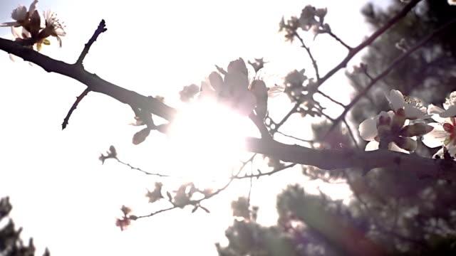 Blühender Baum mit weißen Blüten