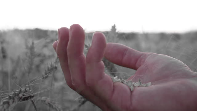 HD SUPER SLOW MO: Blowing Wheat Grains Off A Hand