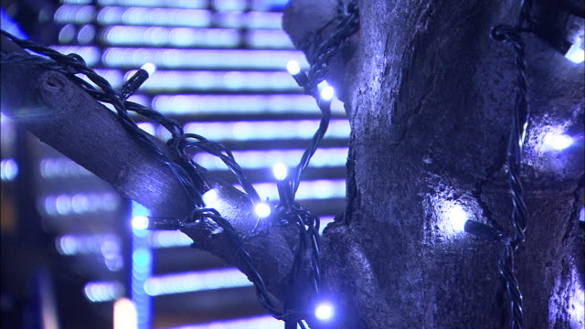 Blue lights decorate a tree as pedestrians walk down a flight of stairs.
