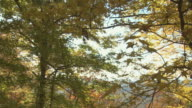 Blue Ridge Mountain Fall Vista