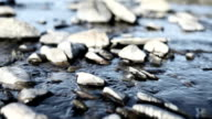 Blue river flowing through white pebbles