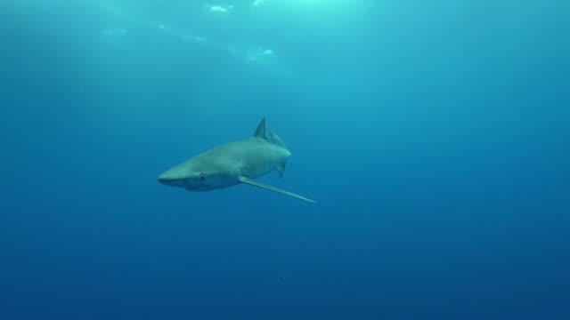 Blue Shark approach