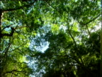Blue sky and sunbeams break through canopy of mangrove trees tilt down trees to roots plunging into dark waters of swamp disrupted by hazy sun flares Dominican Republic