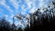 Blue Sky Field