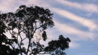 Blue sky sunrise behind silhouette tropical treetops