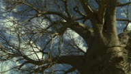 A blue sky surrounds the bare branches of a tree. Available in HD.