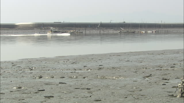 Blue spotted mud hoppers flail about as small vessel passes in distance