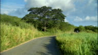 WS Blue van driving down gravel road past lush green trees and fields / Montego Bay, Jamaica