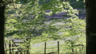 Bluebells and Spring woodland trees blowing in the breeze, Lake District, UK