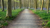 Bluebells forest with path and runner group in the spring, Hallerbos, Halle, Vlaams Gewest, Brussels, Belgium, Europe