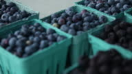 CU POV Blueberries and blackberries on table atoutdoor farmers market / Rutland, Vermont, United States