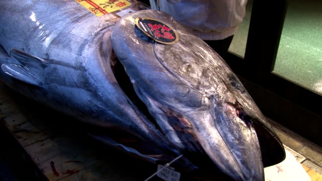 A bluefin tuna fetched 451 million yen or 25000 yen per kilogram in the first auction of the year at the Tsukiji fish market in Tokyo on Monday The...