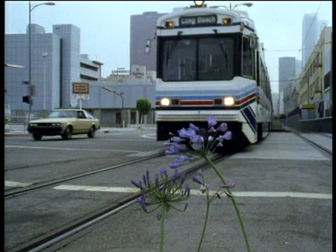 Blueline streetcar travels towards and past camera blue agapanthus in foreground Los Angeles