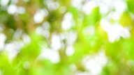 Blurred Background: Abstract Green Nature