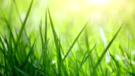 Blurred close-up grass