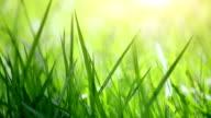 Verschwommene Nahaufnahme Gras
