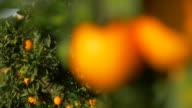 blurred motion, bee on sunlit ripe orange